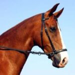 dr cook bitless bridle leather